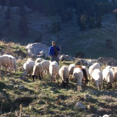 Enfrentamiento por la sanción europea por las ayudas en zonas de pastos