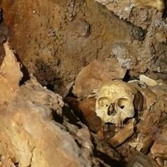 Hallan un enterramiento con restos óseos y de cerámica en Segura de la Sierra